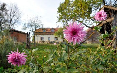 Zweites Jahr für Blühwiesen-Projekt
